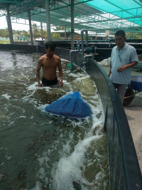 ベトナムのエビ養殖場